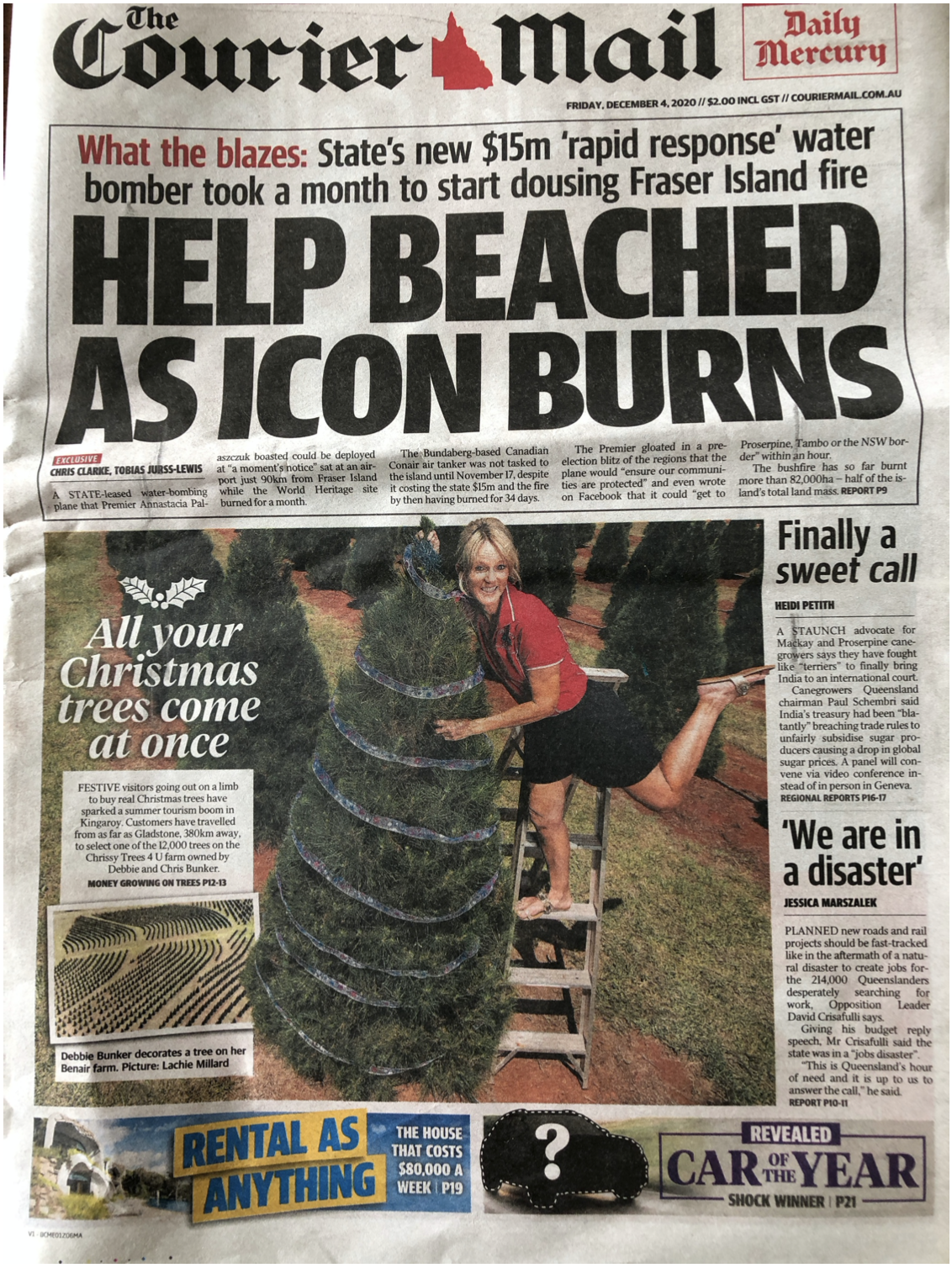 Tourists buy Real Christmas trees