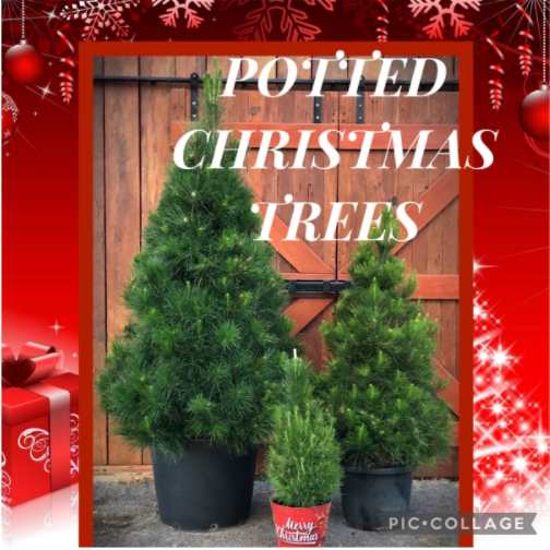 Potted Trees come in 3 sizes